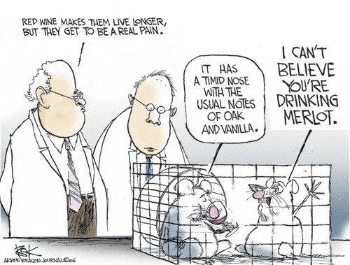 Wine tasting cartoon