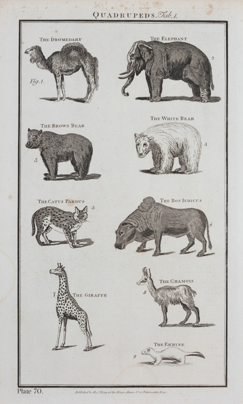 Quadrupeds' illustration from a late 18th century encyclopaedia. Private collection